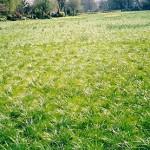 над этим полем развеяли прах Муна